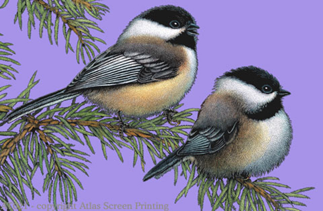 Chickadees 2