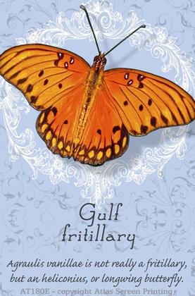 Gulf Fritillary 2