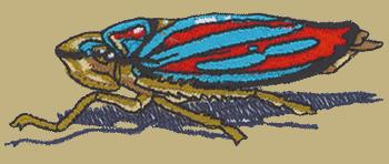 Leaf Hopper Embroidered Cap