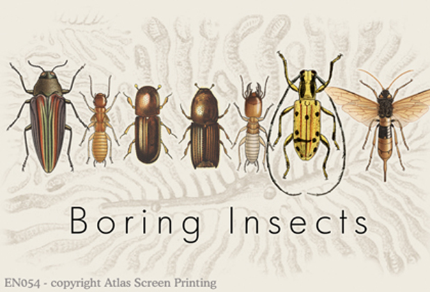 "Boring Insects 2"" X3"" Magnet"