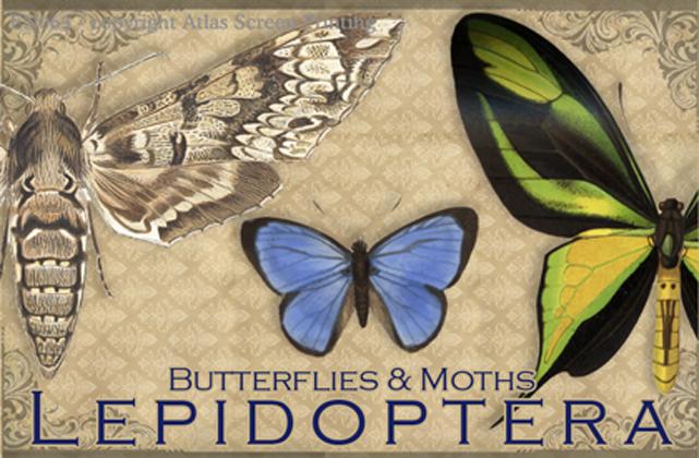 Vintage Lepidoptera 2