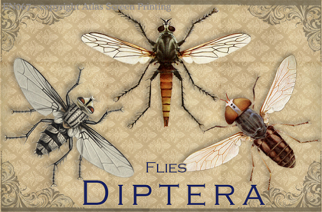 Vintage Diptera 2