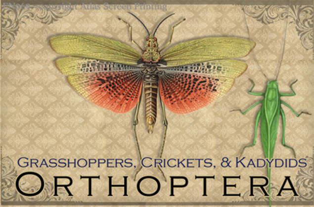 "Vintage Orthoptera 2"" X 3"" Magnet"