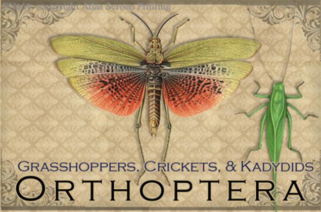 Vintage Orthoptera 2