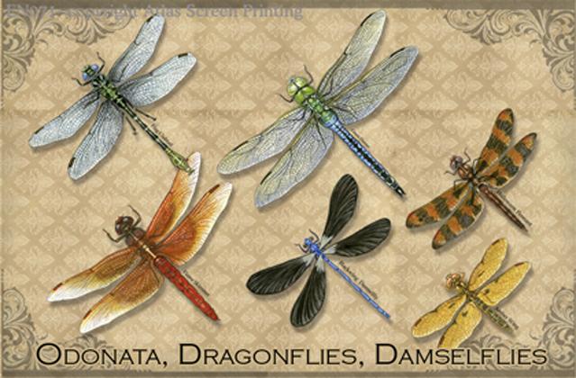 Vintage Odonata 2