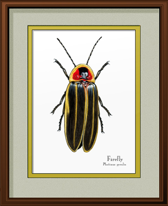 Firefly Print