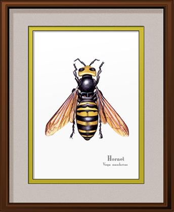 Hornet Print