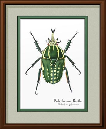 Polyphemus Beetle Print