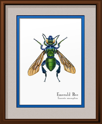 Emerald Bee Print