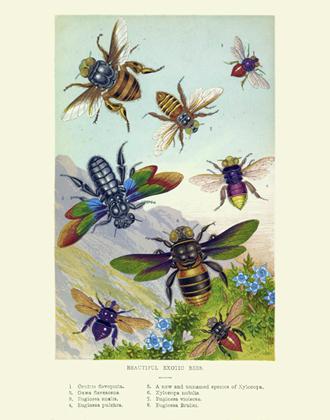 Curiosities - Beautiful Exotic Bees Reproduction Print