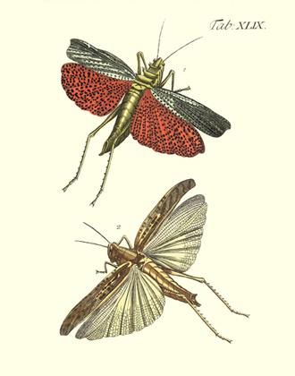 Drury's Tab: XLIX Locusts Reproduction Print