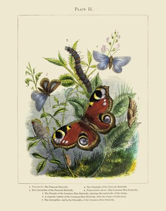 Vivarium PL II Butterflies Reproduction Print