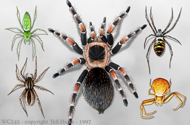 Spider Wrap 2