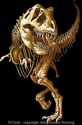 T-Rex Skeleton 2