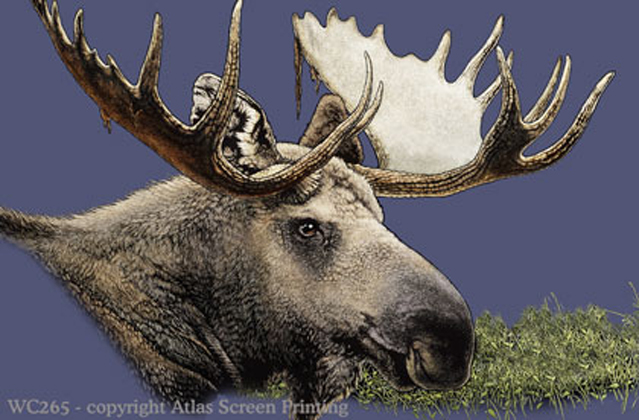 "Moose  2"" X 3"" Magnet"