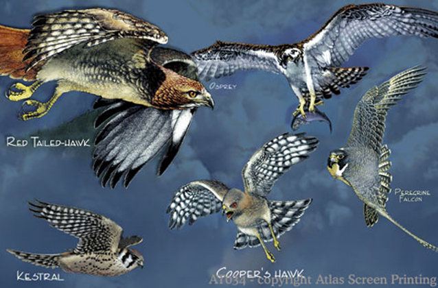 "Birds of Prey 2"" X 3"" Magnet"