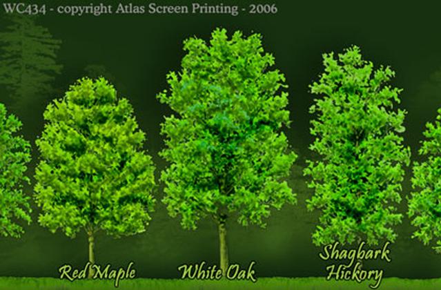 "Trees 2"" X 3"" Magnet"