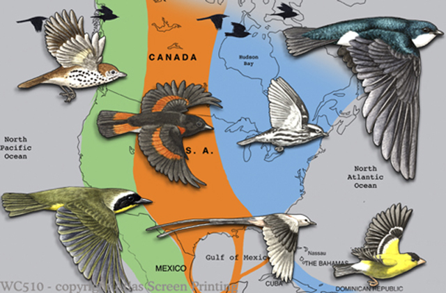 "Bird Migration 2"" X 3"" Magnet"