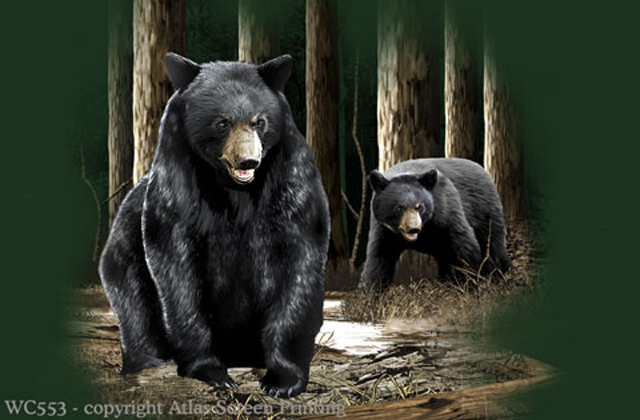Bear Pair 2