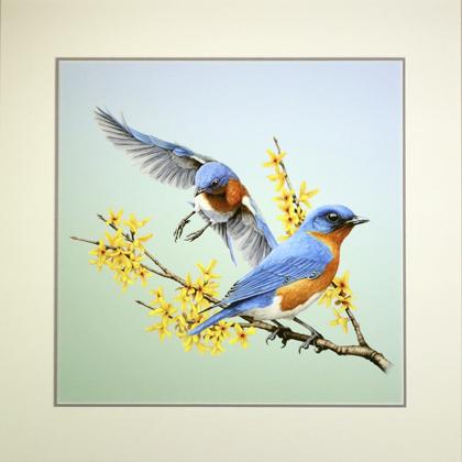 Bluebird Landing Matted Print