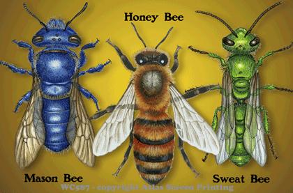 Bee Circle 2