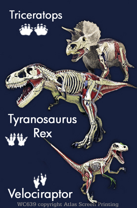 Dino Anatomy 2