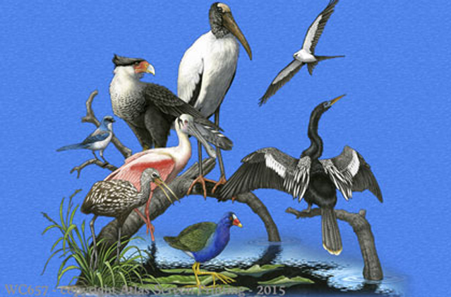 "Florida Birds 2"" X 3"" Magnet"