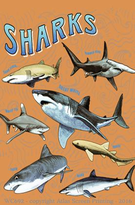 Shark School 2