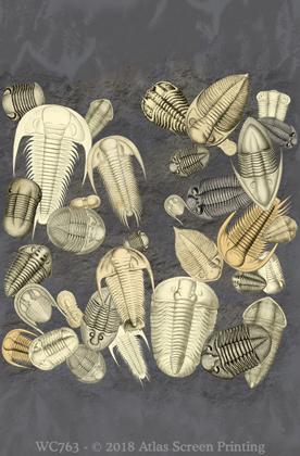 Trilobite Fossils 2