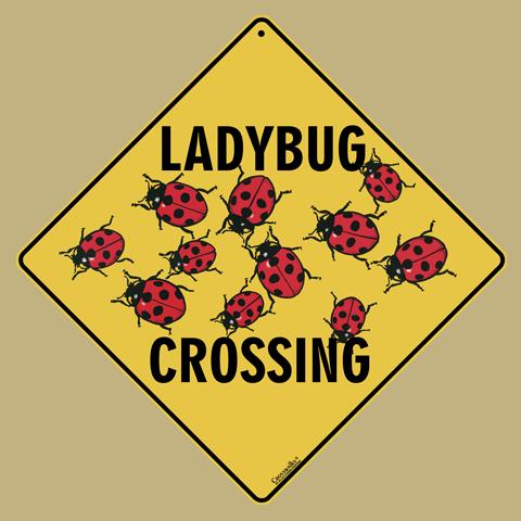 Ladybug Crossing - Front