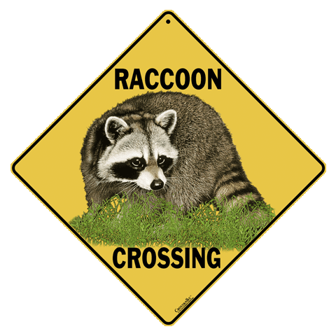 Raccoon Crossing - Front