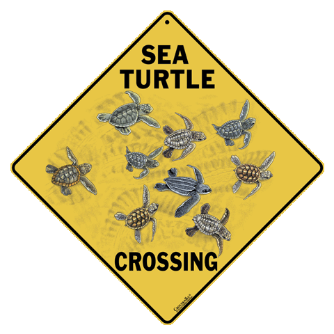 Sea Turtle Babies Crossing