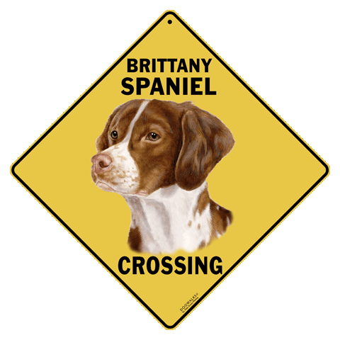 Brittany Spaniel Crossing - Front