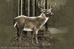 "Whitetail Deer 2"" X 3"" Magnet"