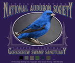 Indigo Bunting Custom Template - Purple
