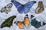 Exotic Butterflies 2