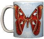 Atlas Moth Ceramic Mug - Front