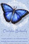 Morpho 2