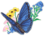 Blue Butterfly Embroidered Cap