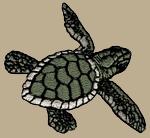 Sea Turtle Embroidered Cap