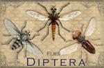 """Vintage Diptera 2"""" X 3"""" Magnet"""