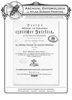 Drury's Tab: XIX Butterflies Reproduction Print