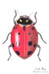 Ladybug Matted Print