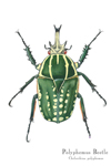 Polyphemus Beetle Matted Print