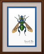 Emerald Bee Framed Print