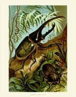 DITS Hercules Beetle Reproduction Print