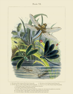 The Vivariam PL VI Dragonflies & Ladybugs Reproduction Print