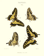 Edwards BF's of NA Papilio VII Reproduction Print