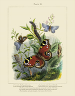 Vivarium PL II Butterflies Reproduction Print