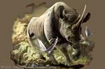 """Rhino 2"""" X 3"""" Magnet"""